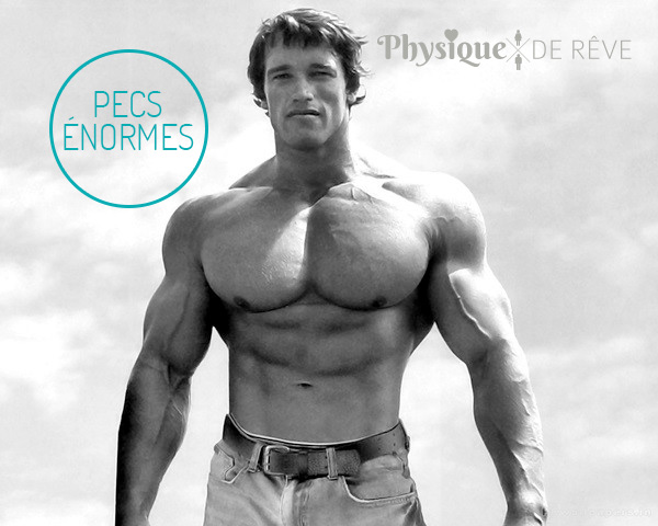 Arnold-Schwarzenegger-pecs-taille
