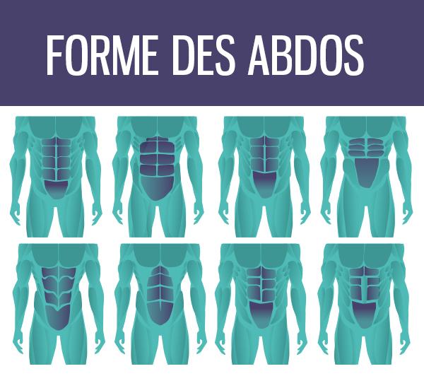 formes-des-abdos-6pack-8pack